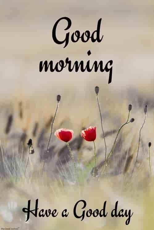 good morning images kannada