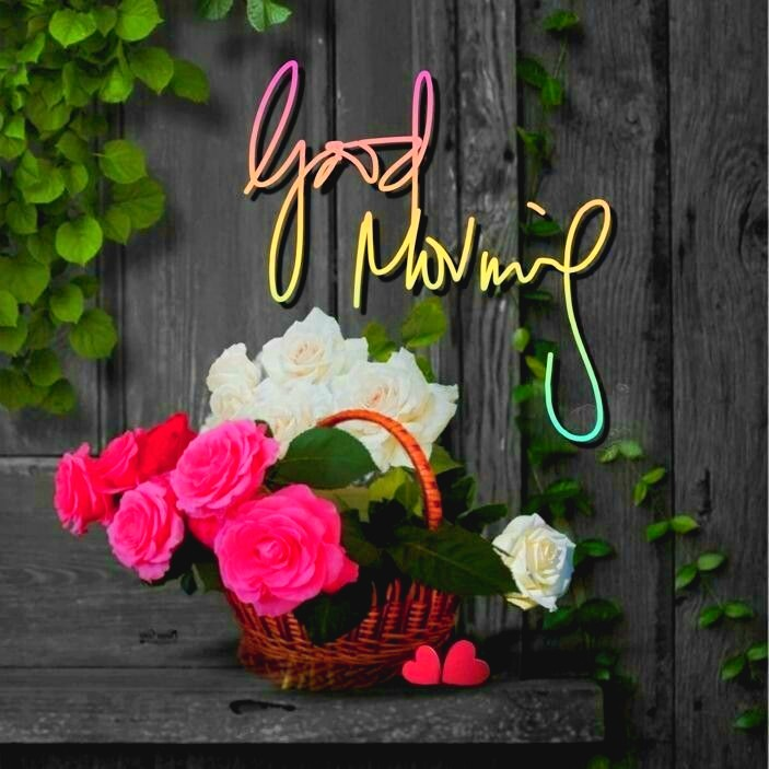 good morning images rose flowers